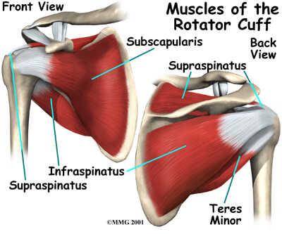 Rotatorcuff ont i axeln